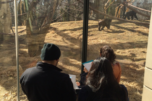 Students observing gorillas for ecology lab at Lincoln Park Zoo