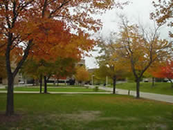 Autumn foliage west of the Cook Administration Building